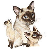 Custom Heat Transfer - Siamese 12x14