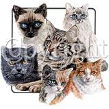 Custom Heat Transfer - Cat Collage 10x11