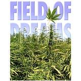 Custom Heat Transfer - Field Of Dreams - Pot 10x12